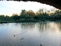Slimbridge - Back from the Brink Zone (November 2013)