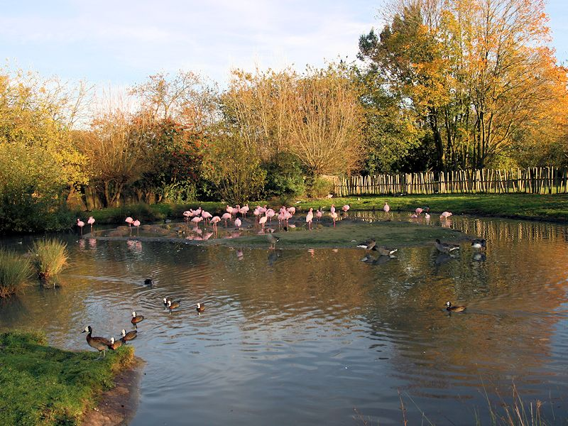 Lesser Flamingo Zone - WWT Slimbridge
