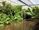Slimbridge -  Tropical House (September 2012)