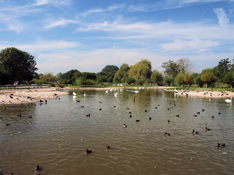 Swan Lake - WWTSlimbridge