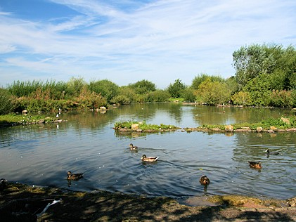 Tundra Zone - WWT Slimbridge